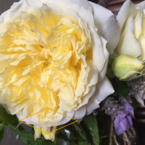 Roses, lavender and herbs